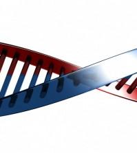 Dna pojęcie z genetyki