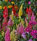 Pokazy florystyczne