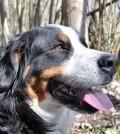 Kleszcze u psa po spacerze w lesie