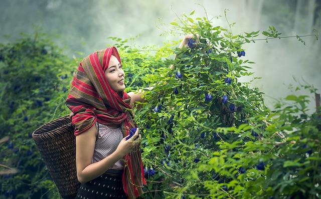 Kobieta pracująca przy zbiorach