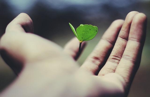 Roślinka rosnąca na dłoni